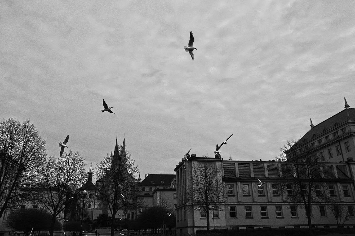 """COVID-19 SERIES, III.  """"No one in the outside world except these lonely birds"""", Prague, Czech Republic, 2020."""
